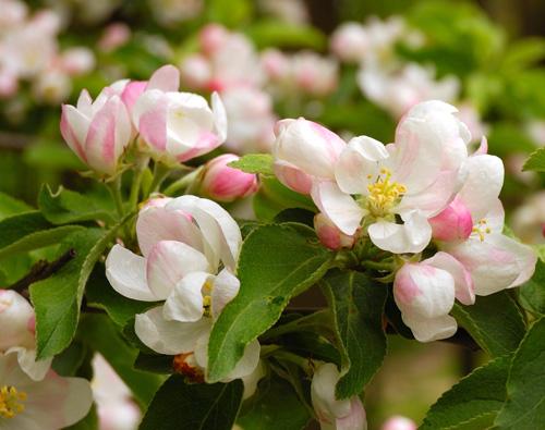 фотосъемка цветов на дереве