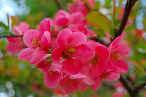 как фотографировать весенние цветы