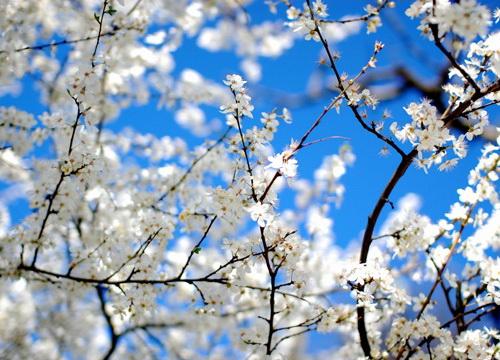композиция цветы и ветки