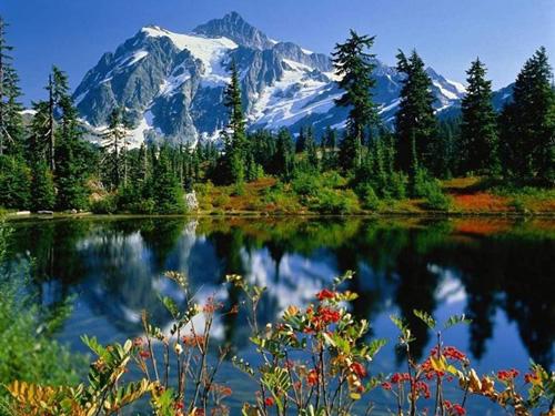 горы и цветы на переднем плане