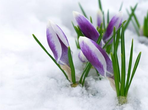 фотосъемка цветов на снегу