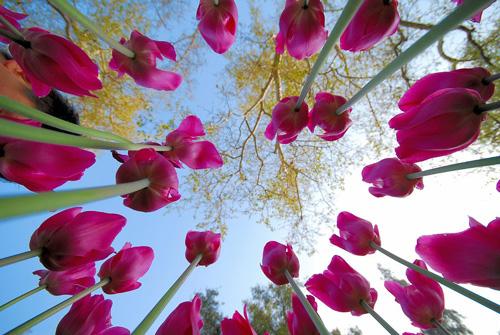 фото цветов крупным планом: