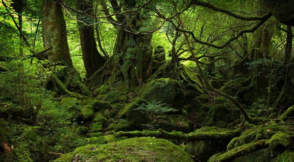 фото леса