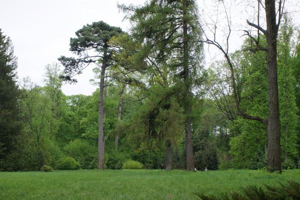 дендропарк скоропадского тростянец