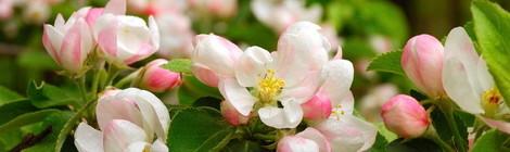 как фотографировать цветы весной